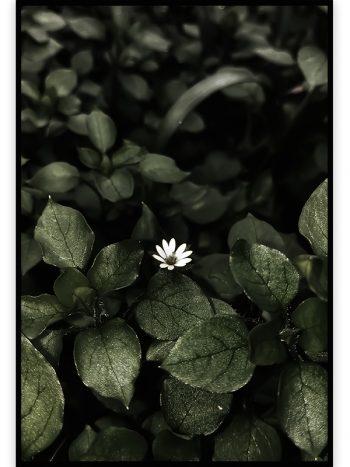 شکوفه سفید بهاری